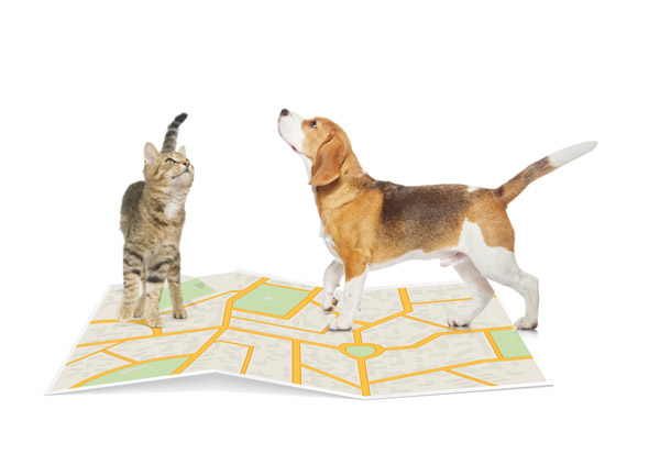 BackHome-Dog_map_cat.jpg