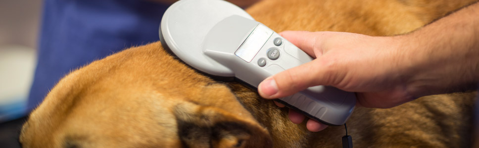 The importance of microchipping your pet!