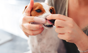 Your Dog's Teeth explained
